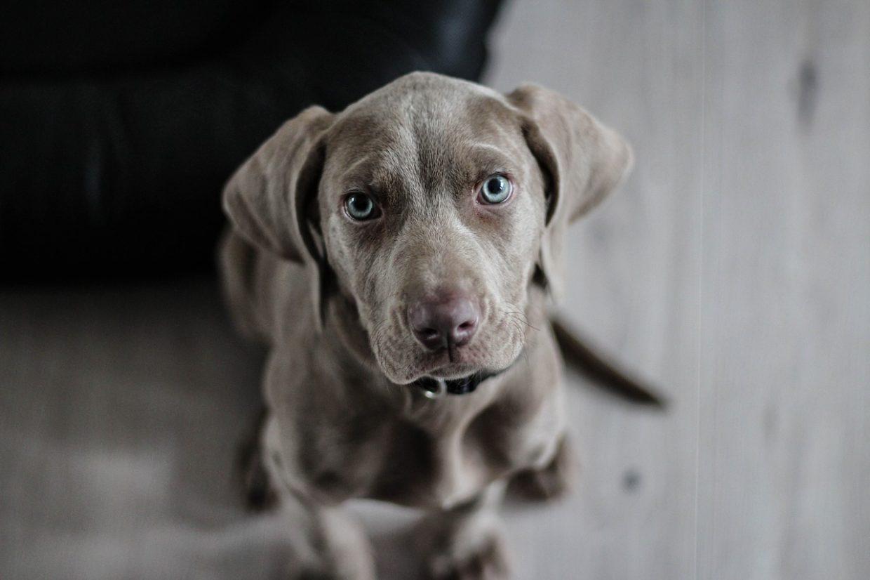 het-juiste-voer-nierdieet-voor-je-hond