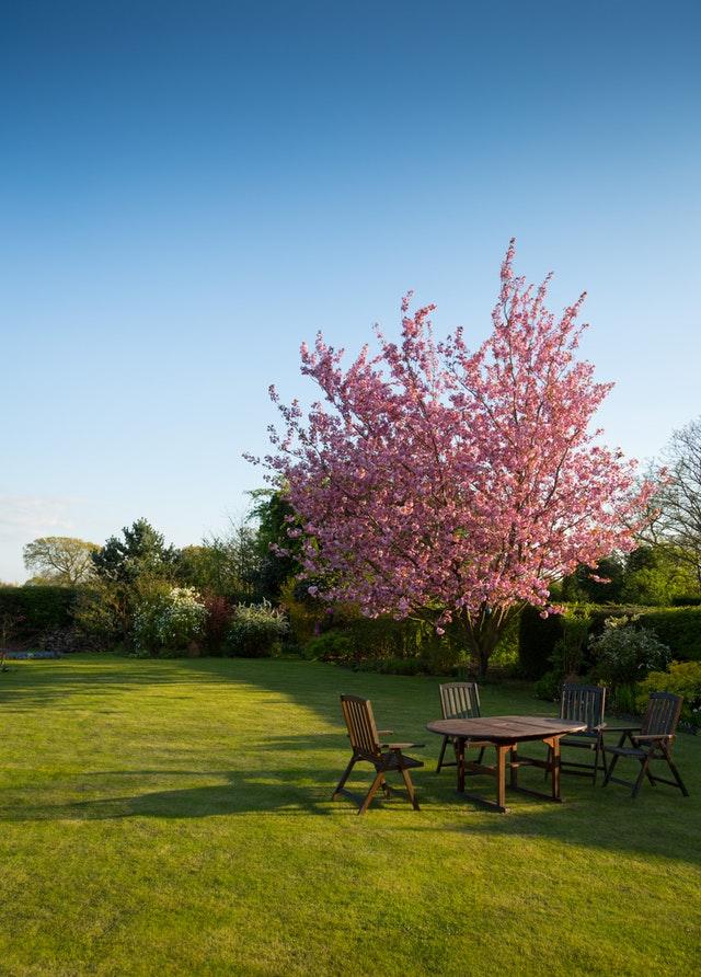 boom in een tuin